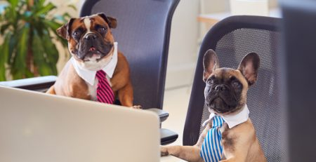 Sheaff Brock | Dogs of the Dow Strategy - bulldogs in the office
