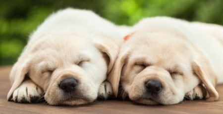 two puppies | the difference between SPX and SPY | Sheaff Brock